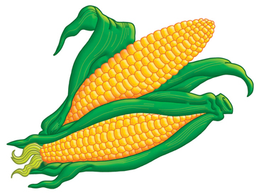 ears of corn printable clip art and images
