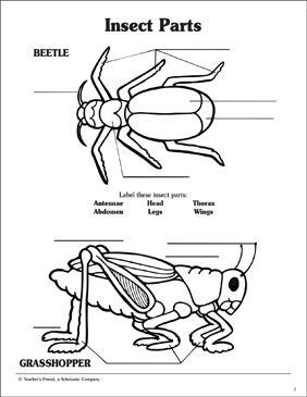 Insect Parts Labeling Activity