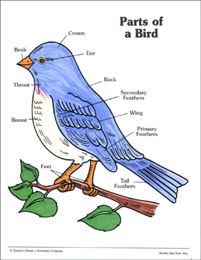 parts of a bird labeling practice page printable skills sheets