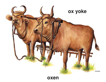 oxen and yoke printable clip art and images rh teachables scholastic com two oxen clipart two oxen clipart